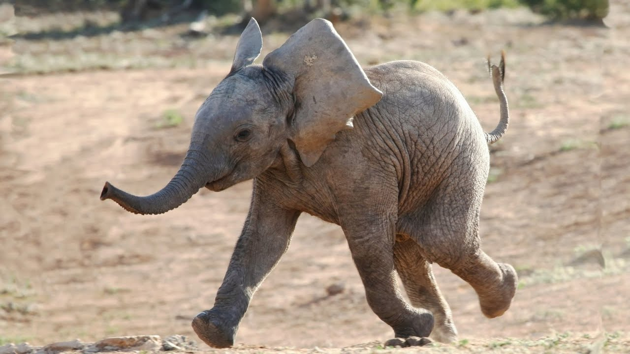 Photo of Most Funny and Cute Baby Elephant Videos Compilation