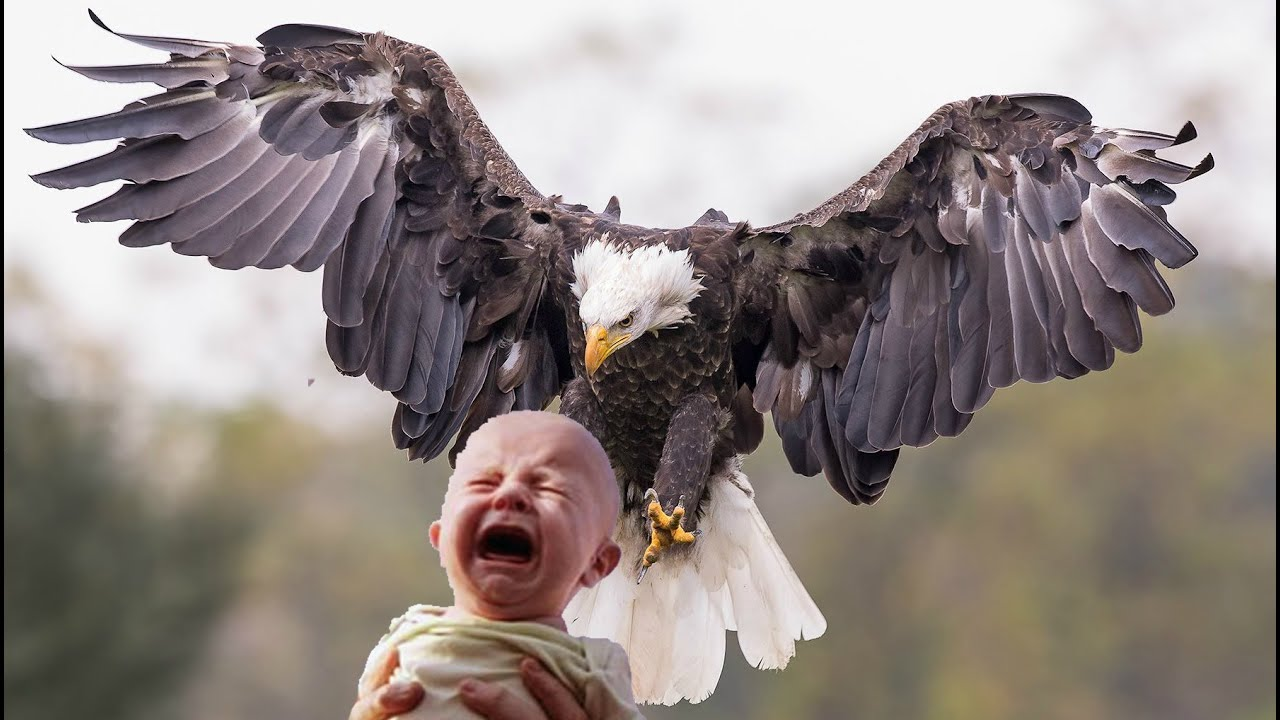Photo of نسر يخطف طفل من أمه Eagle snatched the child from his mother