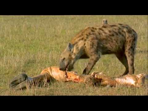 Photo of Scavengers of the Savannah (Wildlife Documentary)