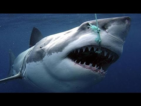 Photo of Sharks : Scavengers of the Seas – Documentary