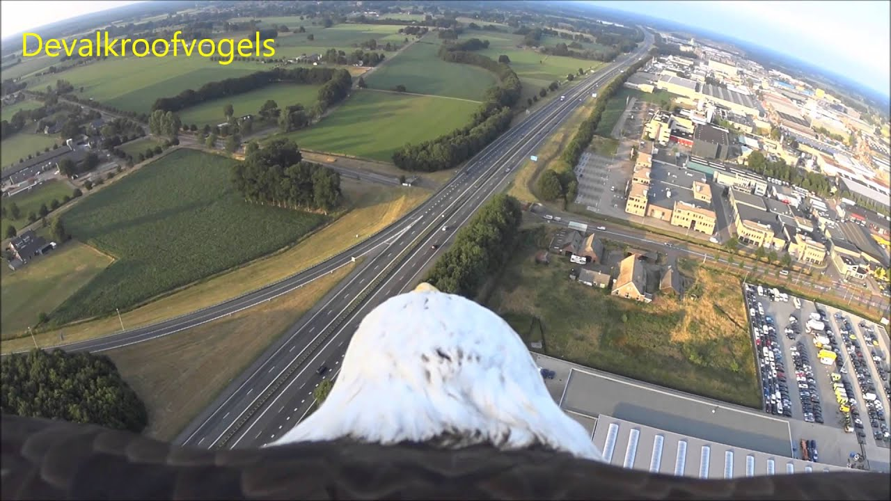 Photo of Eagle flight from balloon