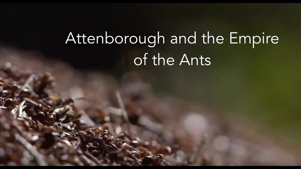 Photo of Attenboroughs and the Empire of the Ants 2018| Ant Documentary| BBC
