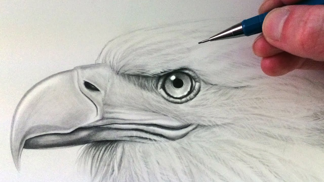 Photo of How to Draw an Eagle Head
