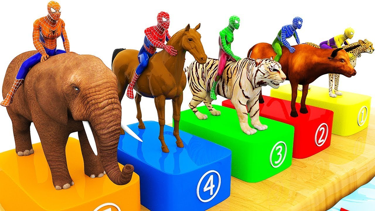 Photo of Learn Colors with Spiderman w Wild Animals Swimming Race for Children | Animals Videos for Kids
