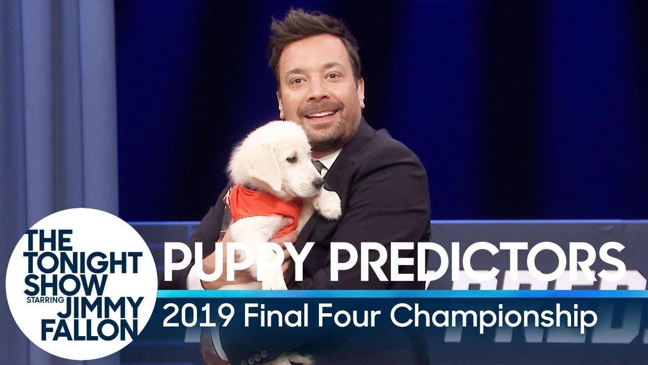 Photo of Puppies Predict the 2019 Final Four Championship