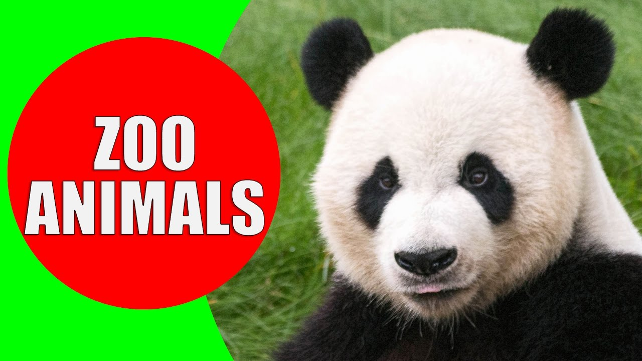 Photo of Zoo Animals for Kids – Videos and Sounds of Wild Animals at the Zoo for Children to Learn