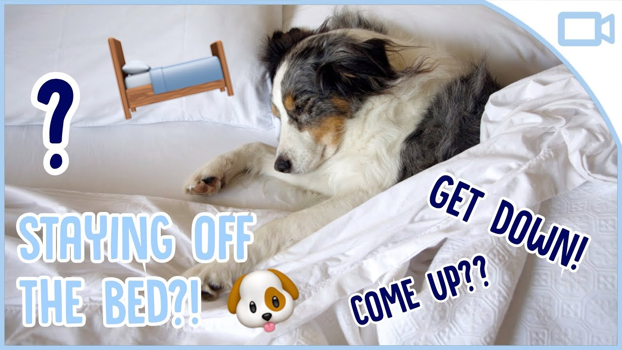 Photo of How to Train Your Dog to Stay off the Bed!