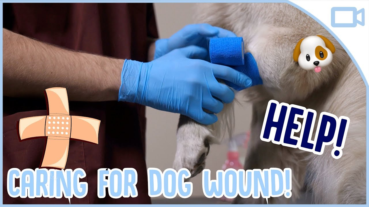 Photo of How to Clean a Dog Wound!