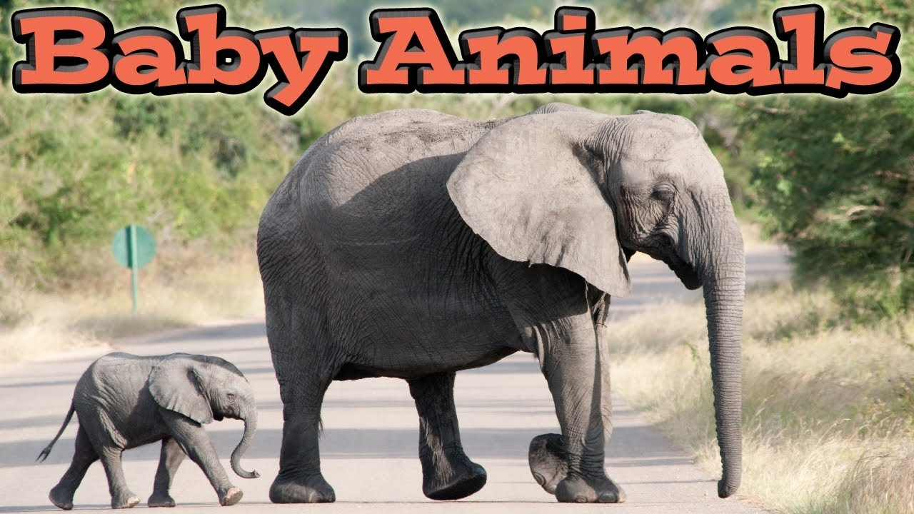 Photo of Cute Baby Animals | Kids Learning Videos
