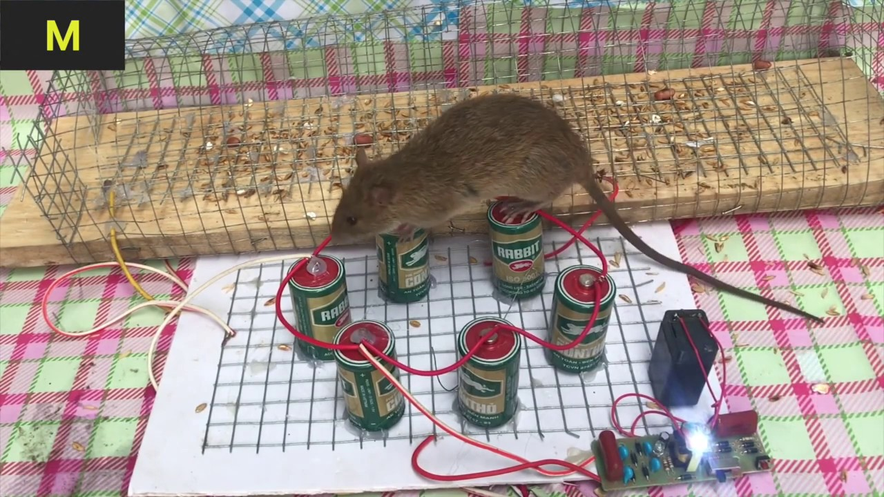 Photo of Top 10 Electric Mouse Traps 2019 Part 2