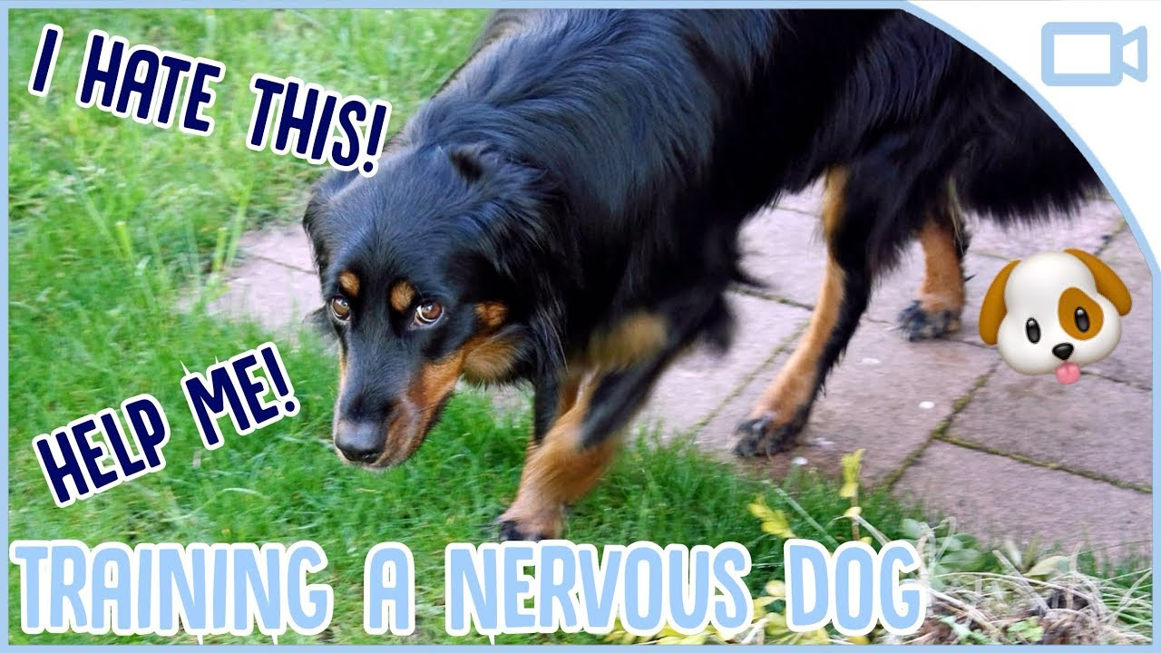 Photo of How to Train a Nervous Dog!