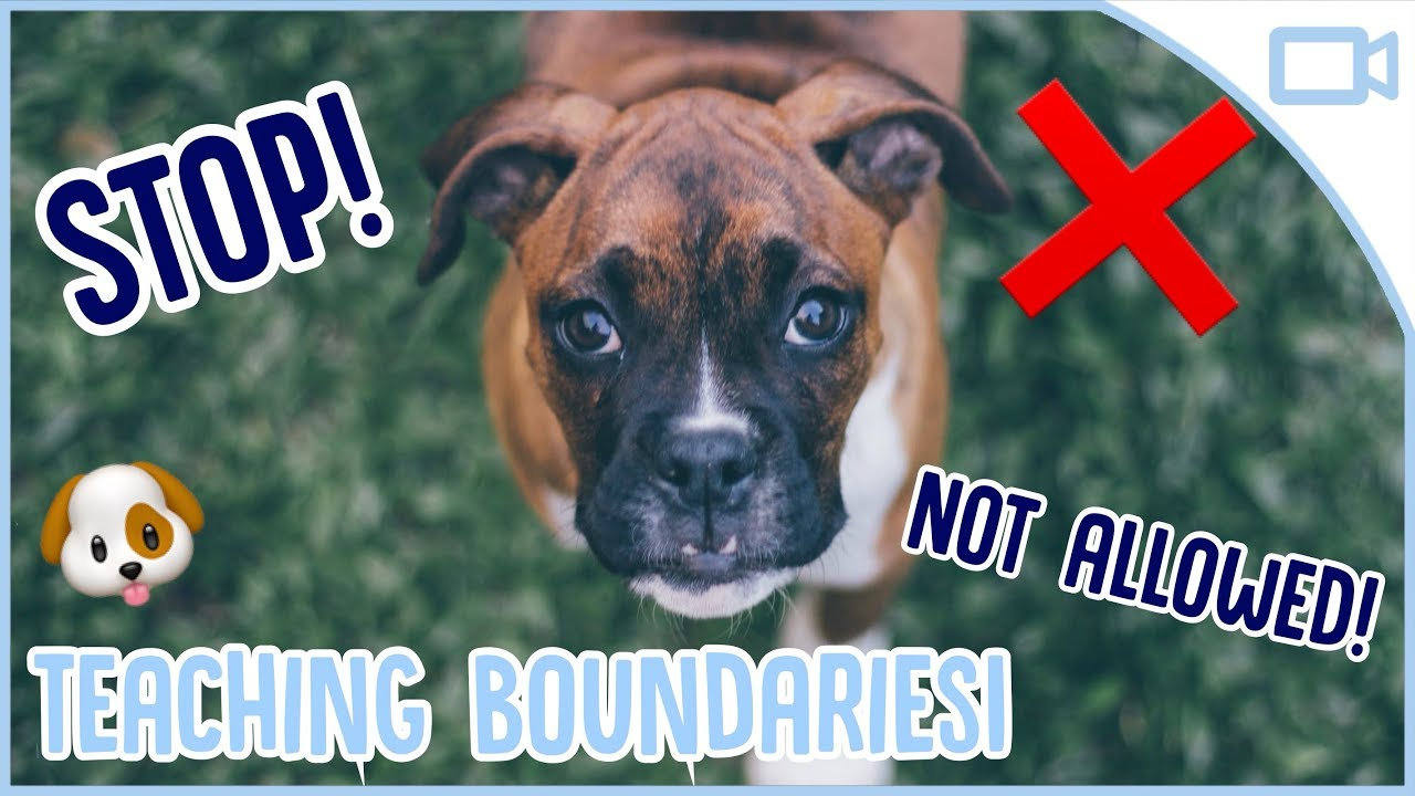 Photo of How to Teach Your Dog Boundaries!