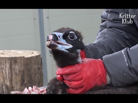 Photo of Eagle Can't Eat With His Broken Beak | Kritter Klub