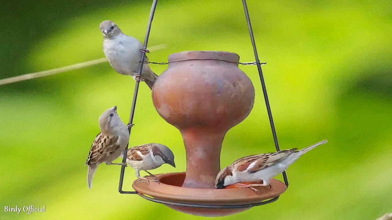 Photo of Water Feeder For Bird – Clay Pot Bird Water Feeder – Eco Friendly
