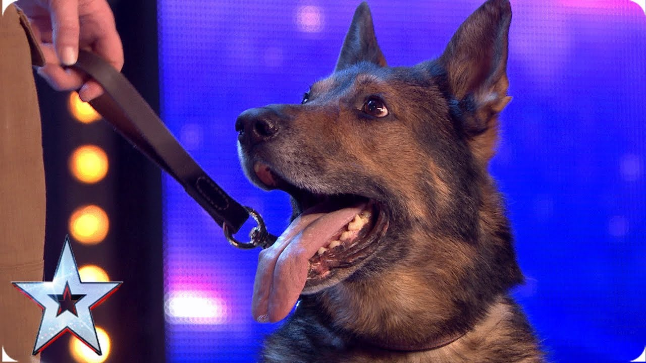 Photo of Heroic police dog Finn moves the Judges to tears | Auditions | BGT 2019