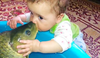 BABIES MEET FISH FOR THE FIRST TIME   Funny Babies And Animals Videos Compilation