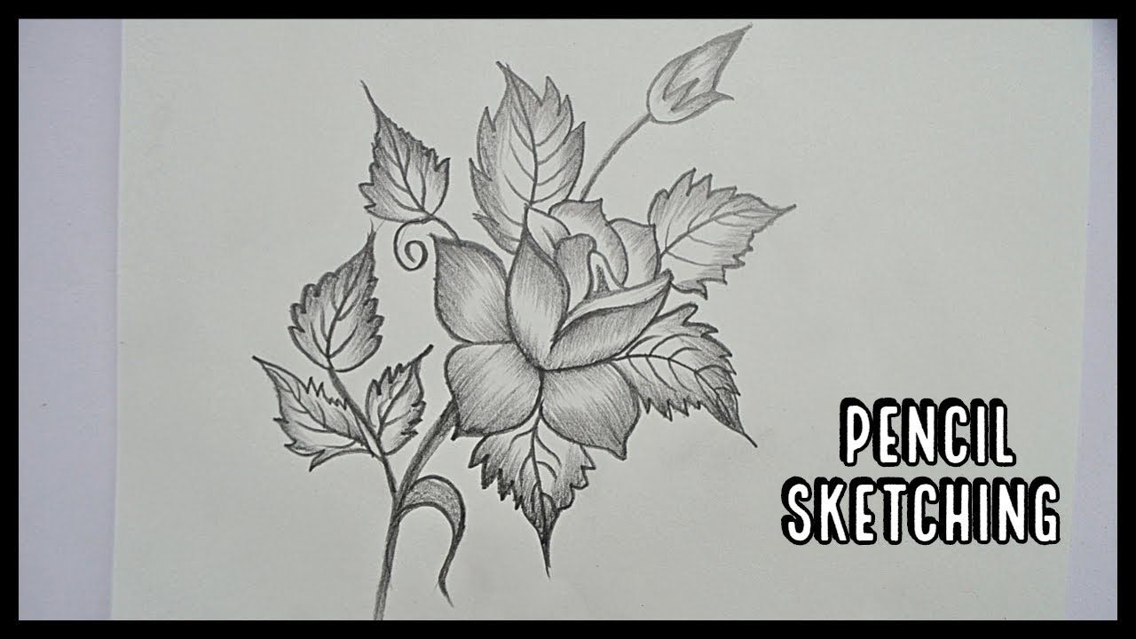 Photo of How To Draw A Flower || Pencil Art || Pencil Sketching || Pencil Drawing