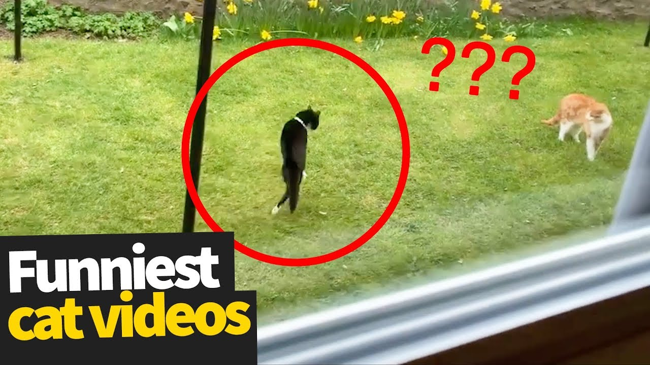 Photo of Hilarious Cat Viral Videos | Ultimate Cat Compilation 2019
