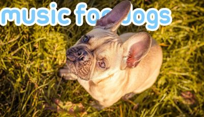 Pet Therapy: Music to Help Your Dog Sleep and Relax!