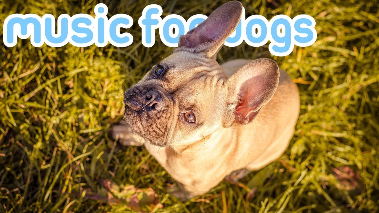 Photo of Pet Therapy: Music to Help Your Dog Sleep and Relax!