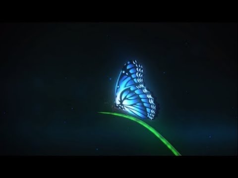 Photo of Camtasia Intro Butterfly Project