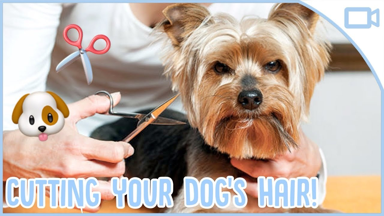 Photo of How to Cut Your Dogs Hair at Home!