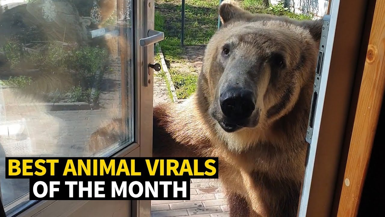 Photo of Top Viral Animal Videos – May 2019