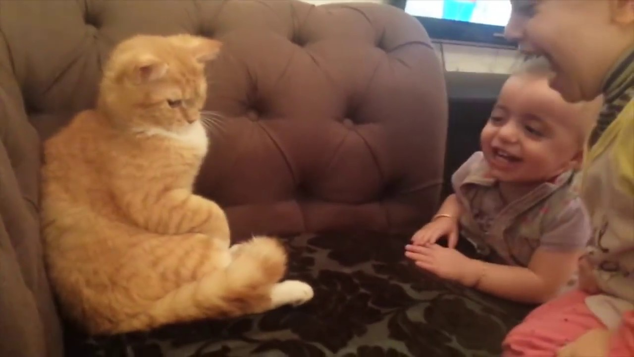 Photo of Funny  Baby  and Cat Video فيديو اطفال مع قط
