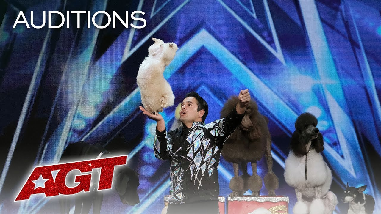 Photo of Cute Animal Act! Dominguez Poodles Perform Fun Tricks! – America's Got Talent 2019