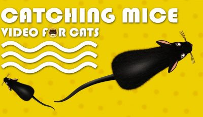 CAT GAMES – Catching Mice! Entertainment Video for Cats to Watch.