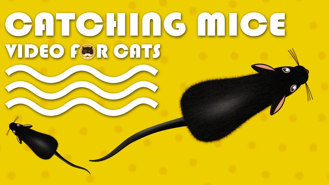 Photo of CAT GAMES – Catching Mice! Entertainment Video for Cats to Watch.
