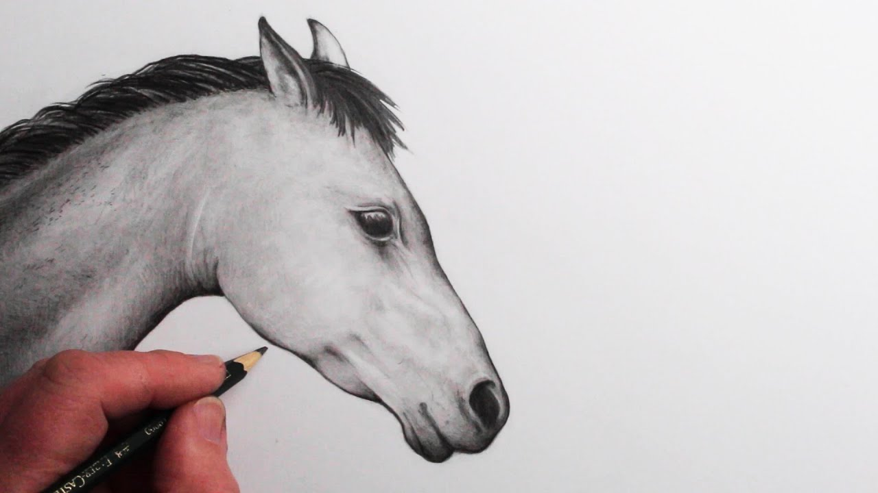 Photo of How to Draw a Horse Head: Narrated